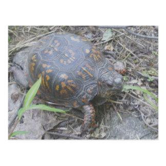 Postal del este #1 de la tortuga de caja