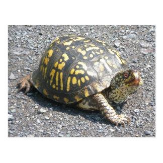 Postal del este de la tortuga de caja