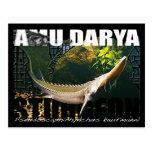 Postal del esturión de Amu Darya