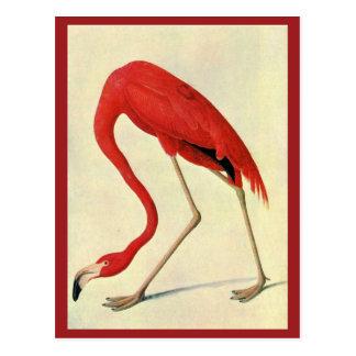 Postal del flamenco de Audubon