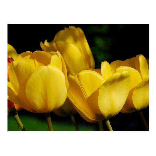 Postal del flor de la primavera