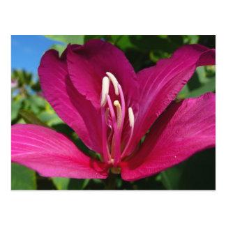 Postal del flor del árbol de orquídea