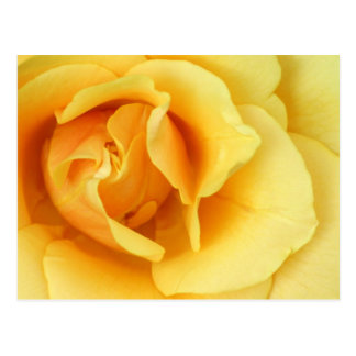 Postal del flor del rosa amarillo