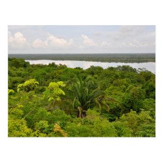 Postal del fondo de la selva tropical