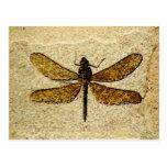 Postal del fósil de la libélula