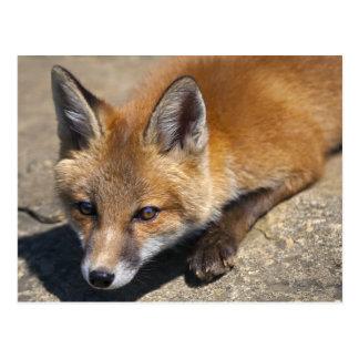 Postal del Fox de Luna