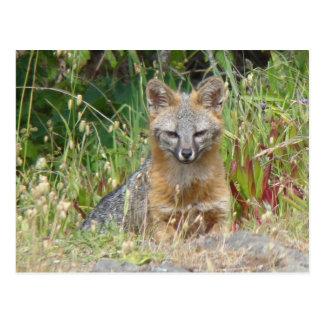 Postal del Fox gris