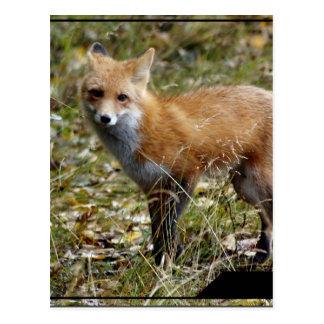 Postal del Fox