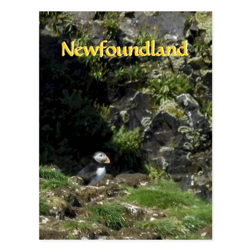 Postal del frailecillo de Terranova