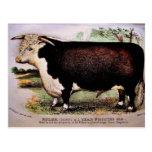 Postal del ganado de Gauci Hereford