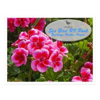 Postal del Gardenia