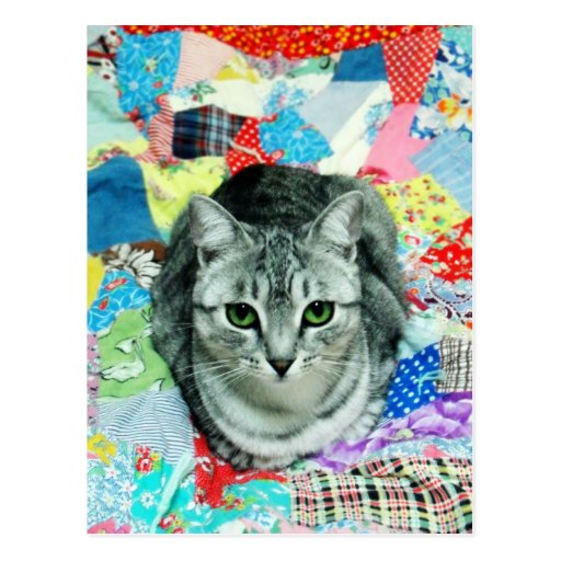 Postal del gatito del edredón