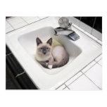Postal del gatito del fregadero