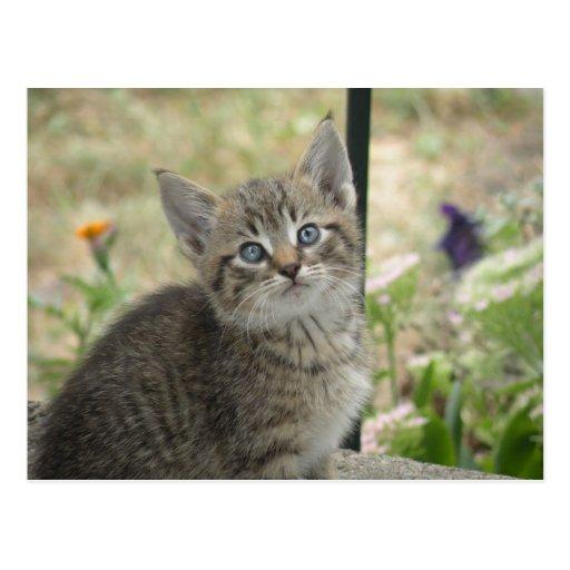 Postal del gatito del Tabby
