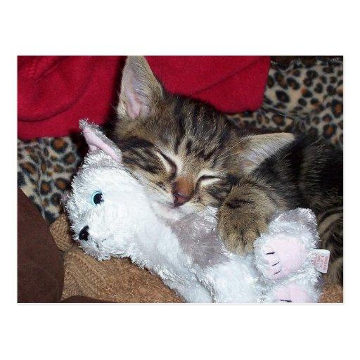 Postal del gatito el dormir