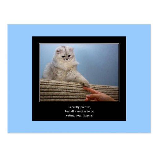 postal del gato 14 del haiku