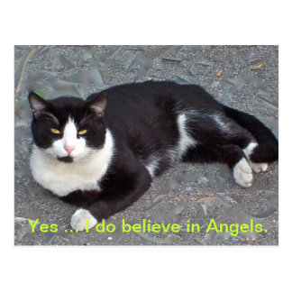 Postal del gato con decir del humourus