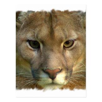 Postal del gato de la montaña del puma