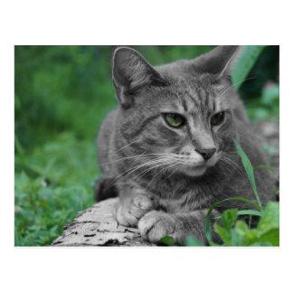 Postal del gato de los ojos verdes