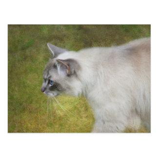 Postal del gato de Ragdoll