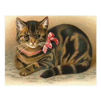 """Postal del gato de Tabby"" Postales"