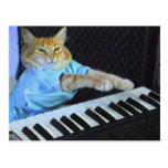 ¡Postal del gato del teclado!