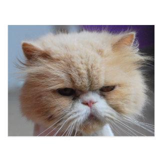 Postal del gato persa del Ronroneo-fect