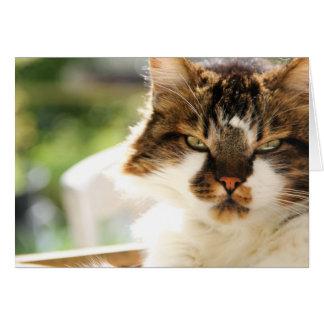 Postal del gato tarjeta de felicitación
