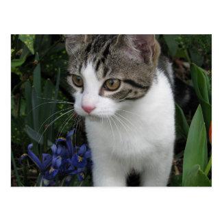 Postal del gato