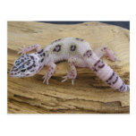 Postal del Gecko del leopardo