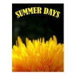 Postal del girasol de los días de verano