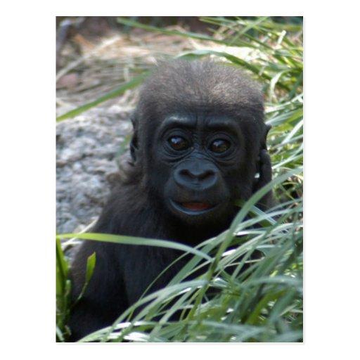 Postal del gorila 4x6 del bebé