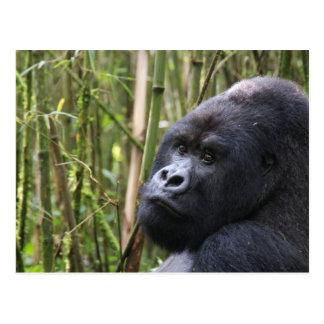 Postal del gorila de la tierra baja