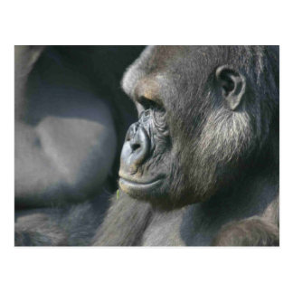 Postal del gorila de montaña