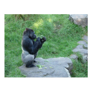 Postal del gorila de tierra baja occidental