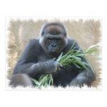 Postal del gorila del Silverback