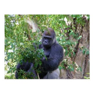 Postal del gorila