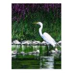 """Postal del """"gran Egret"""""""