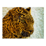 Postal del guepardo