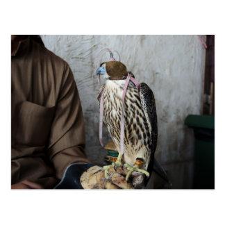 Postal del halcón de la cetrería