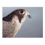 Postal del halcón de peregrino