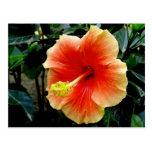 postal del hibisco