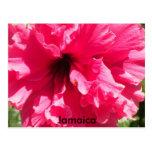 Postal del hibisco de Jamaica