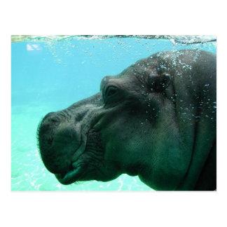 Postal del hipopótamo de la natación