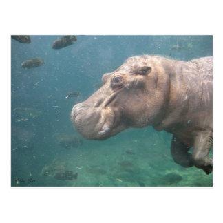 postal del hipopótamo