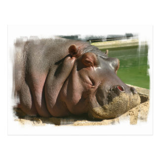Postal del Hippopotamus