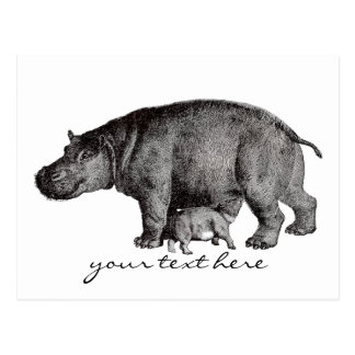 Postal del Hippopotamus del vintage