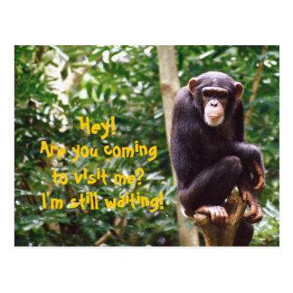 Postal del humor del chimpancé