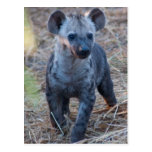 Postal del Hyena del bebé