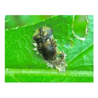 Postal del insecto de la larva del escarabajo de l